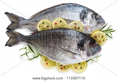 Dorada Fish With Lemon