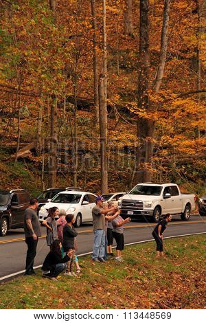 GREAT SMOKEY MOUNTAINS NATIONAL PARK - NOVEMBER 5, 2015: Tourists stop along US441 to observe a family of black bears walking in the nearby woods November 5, 2015 in Great Smokey Mountains National Park, TN.