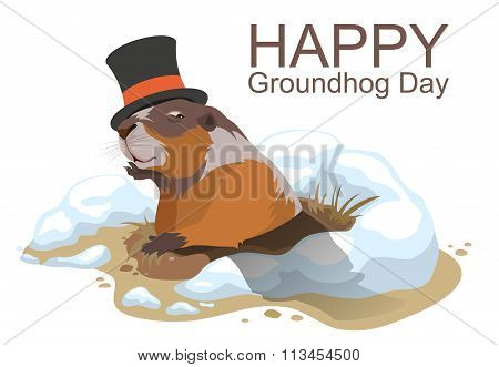 Happy Groundhog Day. Marmot climbed out of hole and yawns