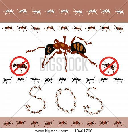 The attack ants, marching ants, no ants in the house, insects.
