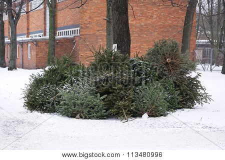 discarded christmas trees
