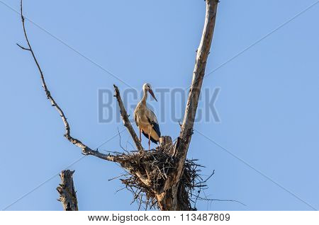Stork In The Nest Close To Flix, Spain