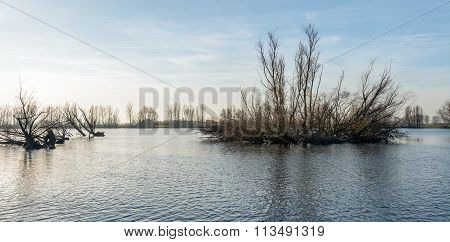 Flooded Land With Bare Trees Early In The Morning