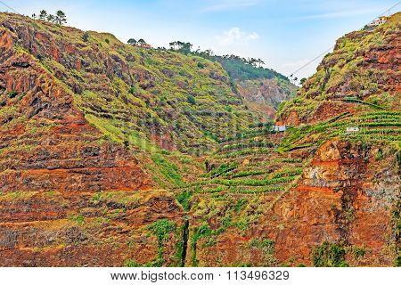 Colorful Rocky Cliff Coast Of Madeira With Banana Plantations