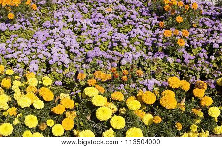Flowerbed with orange and yellow marigolds and blue ageratum.