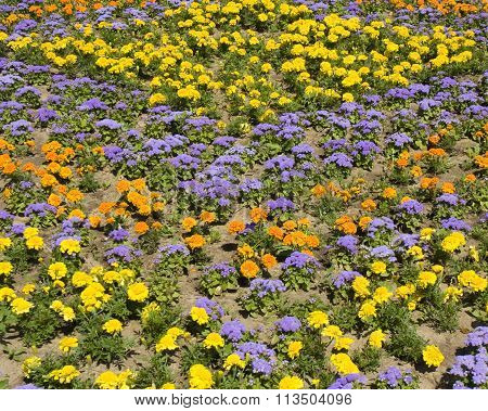 Flower bed with yellow and orange marigolds and blue ageratum.