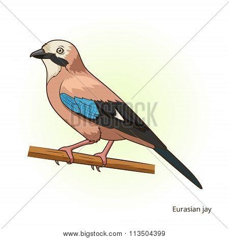 Eurasian jay bird educational game vector