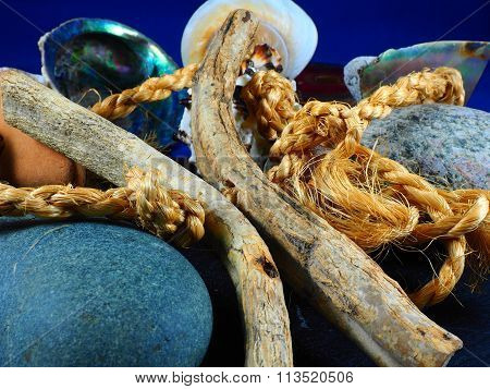 Driftwood and shells