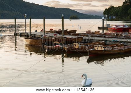 Romantic Dusk Scene Of A Beautiful Mute Swan And Boats Moored In A Pier In Lake  Windermere