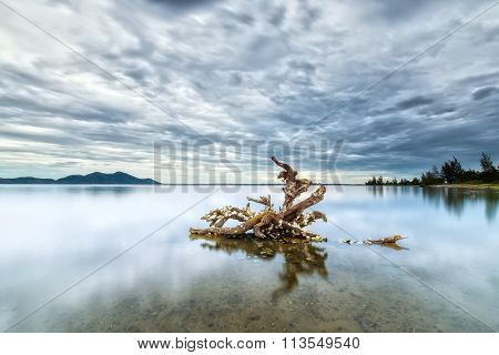 Tree roots hold strong on the lake