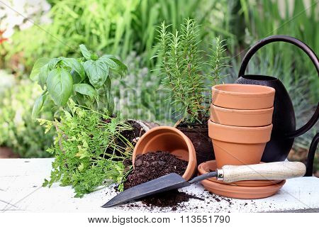 Herb Gardening And Trowel