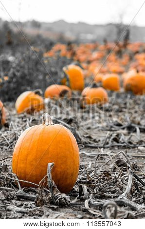 Popping Pumpkin Patch