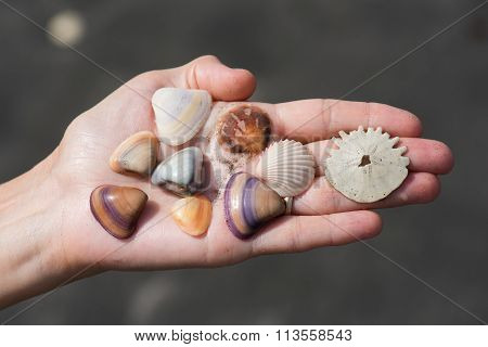 Collection of mixed shells on a hand