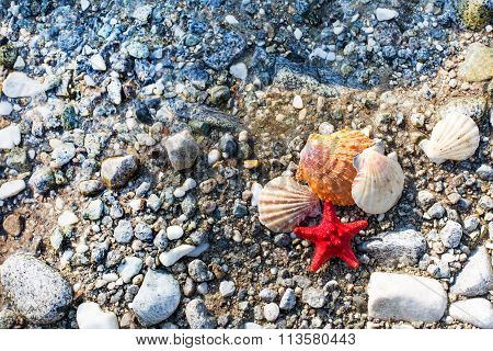 Red Sea star, sea shells, stone beach, clean water background