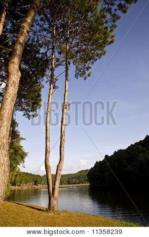 forest near the reservoir