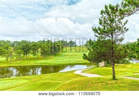 Pine tree inside wind Dalat Golf