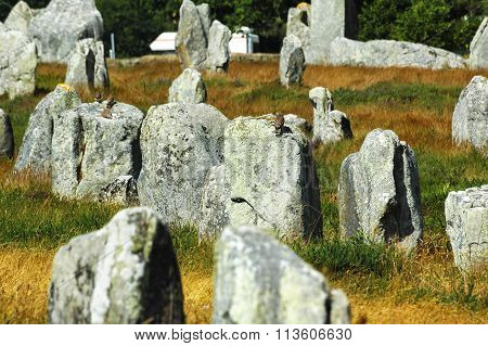 Carnac (brittany, France): Birds On The Menhirs