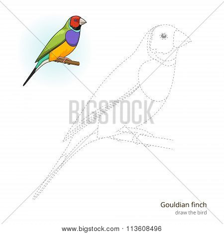 Gouldian finch bird learn to draw vector