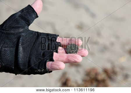 San Clemente CA Jan. 7 2016: A man uses his Metal Detector as he sifts through the sand after the Godzilla El Nino of 2016. Here he shows a Quarter he recently found buried in the sand.