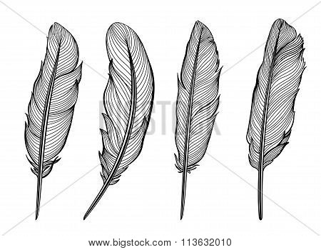 Set of isolated feathers. Vector.