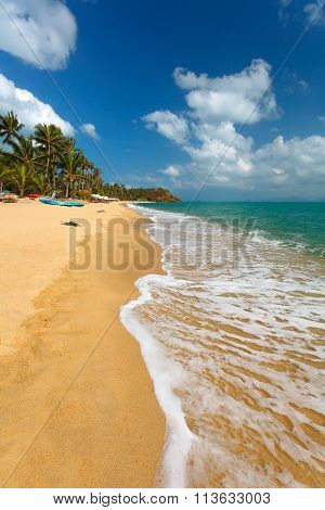Sandy Beach And Palm Trees.