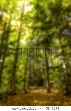 abstract blurred view of a forest pathway