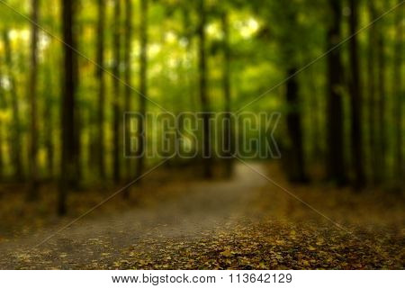 blurred view of a forest trail landscape