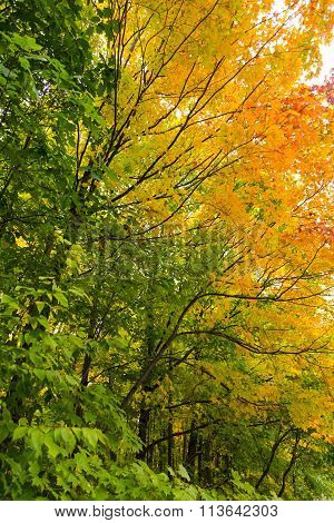 forest foliage changing colour in autumn season