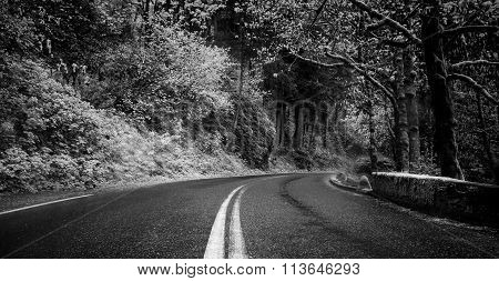 monochrome view of highway in deep forest