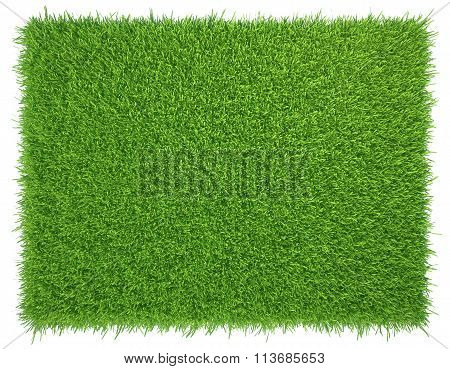 Green grass. natural background texture. fresh spring green grass