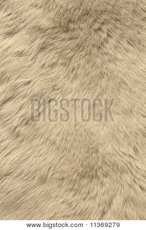 Texture of skin of polar bear.