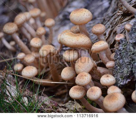 Mushrooms, Southern Bohemia