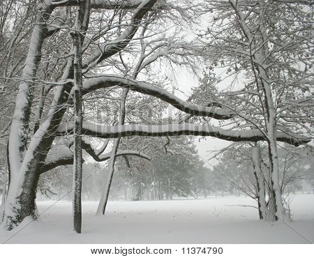 Beautiful Snow Days