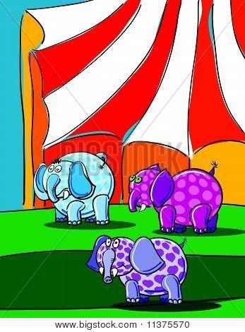 Elephants And Circus
