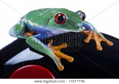 Frog driver