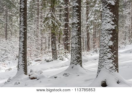 Landscape With Winter Fairy Tail Forest