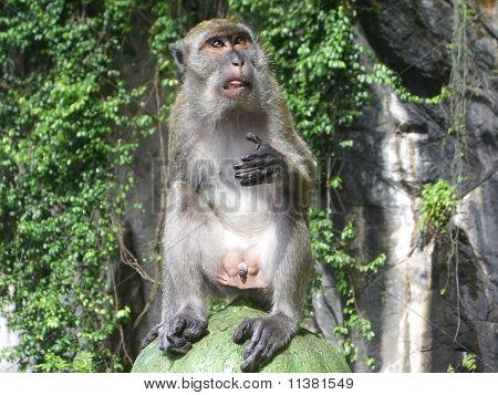 A monkey sitting on the steps up to Batu Caves near Kuala Lumpur Malaysia poster
