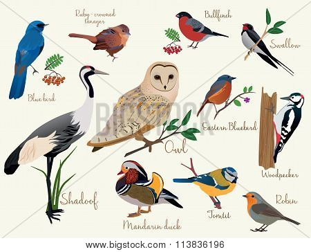 bird icons. Colorful realistic birds icons set isolared
