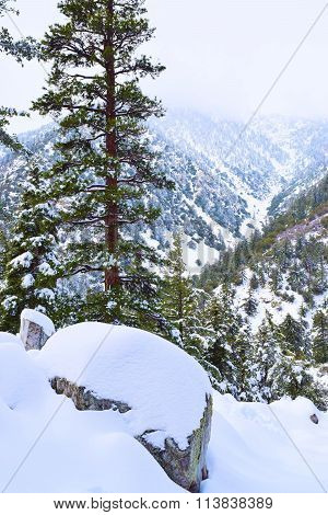 Snow blanketing a mountain forest taken in Mt Baldy, CA