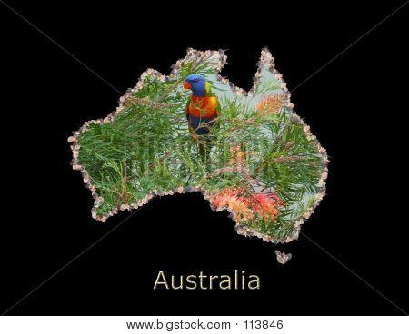 Australian Lorikeet