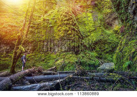 Oregon Mossy Gorge Hiker