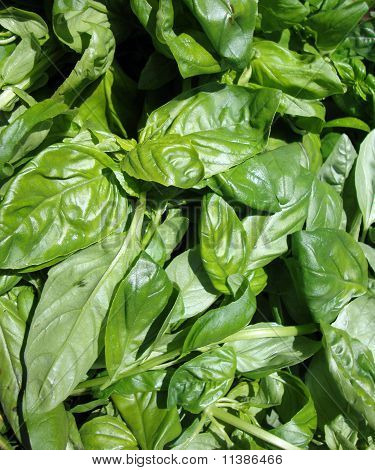 Close Up Of Basil Leafs On Display At Farmers Market