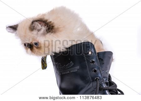 Puss In Boots - Himalauan Can In Doc Martens Boot
