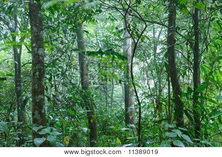 Tropical Rain Forrest