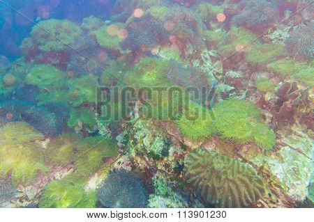 Coral Reef Covered In Hard Corals