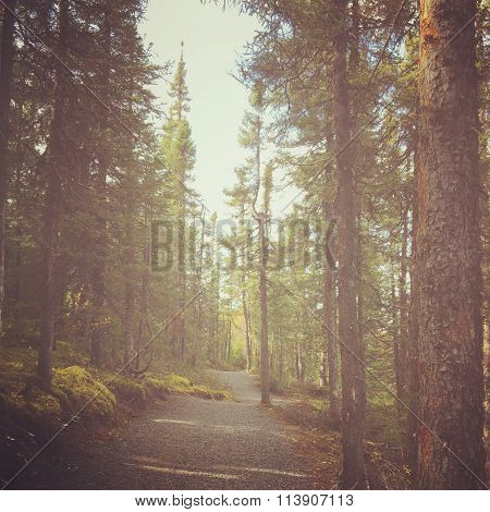 Captivating Instagram Of Forest Path In Summer With Filter