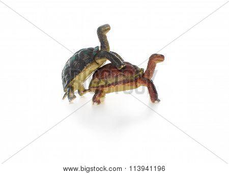 act of love tortoises