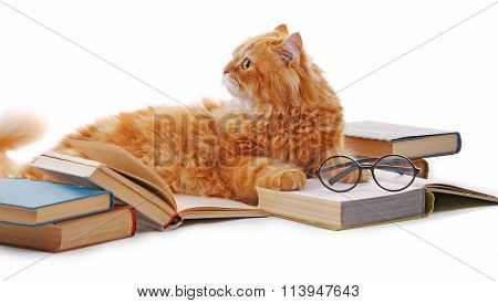 Red cat and books isolated on white