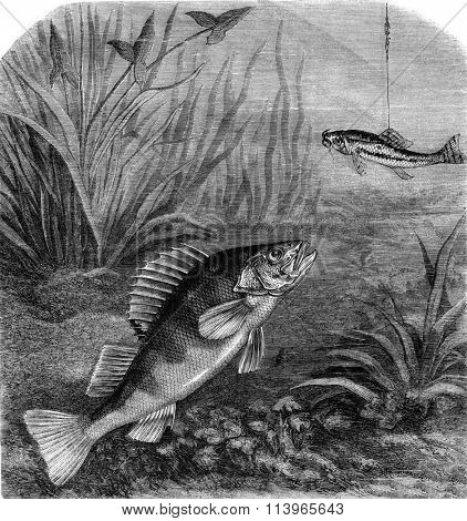 Perch fishing, vintage engraved illustration. Magasin Pittoresque 1869.
