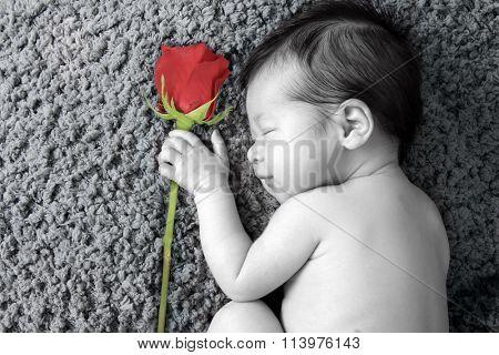 Newborn baby girl holding a valentine rose, asleep on a blanket.